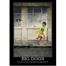 big dogs funny animal