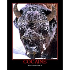 cocaine bison buffalo snow demotivational