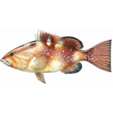 Color Fish Decal 1