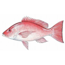 Color Fish Decal 2