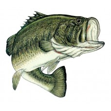 Color Fish Decal 3 Large mouth Bass