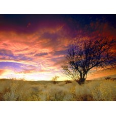 Counds and Sky Vinyl Wall Graphics 004
