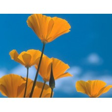 Flowers and Plants Vinyl Wall Art 007