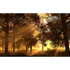 Forest and Trees Vinyl Wall Decals 001