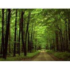 Forest and Trees Vinyl Wall Decals 002