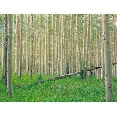 Forest and Trees Vinyl Wall Decals 004