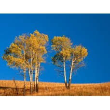 Forest and Trees Vinyl Wall Decals 007