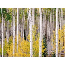 Forest and Trees Vinyl Wall Decals 008