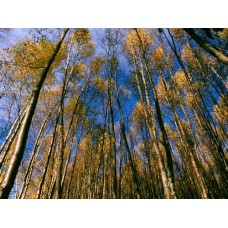 Forest and Trees Vinyl Wall Decals 009
