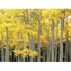 Forest and Trees Vinyl Wall Decals 010