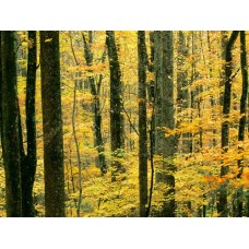 Forest and Trees Vinyl Wall Decals 013