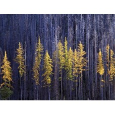 Forest and Trees Vinyl Wall Decals 014
