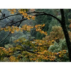 Forest and Trees Vinyl Wall Decals 016
