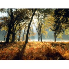 Forest and Trees Vinyl Wall Decals 019