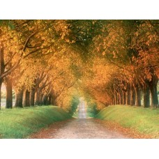 Landscape Vinyl Wall Graphic Decals 03