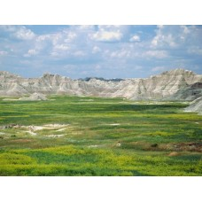 Landscape Vinyl Wall Graphic Decals 06