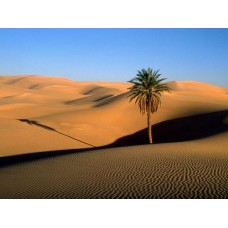 Sand and Deserts Vinyl Wall Graphics 15