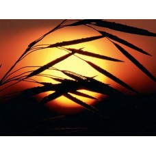Sunrise and Sunsets Wall Decals 018