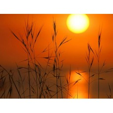 Sunrise and Sunsets Wall Decals 026