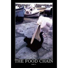 the food chain eating demotivational
