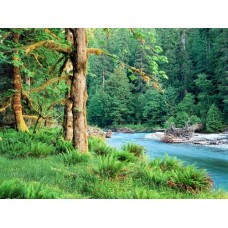 Waterfalls and Rivers Wall Decals 006