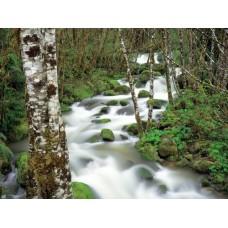 Waterfalls and Rivers Wall Decals 019