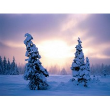 Winter and Ice Adhesive Wall Decals 003
