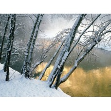 Winter and Ice Adhesive Wall Decals 004