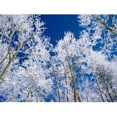 Winter and Ice Adhesive Wall Decals 005